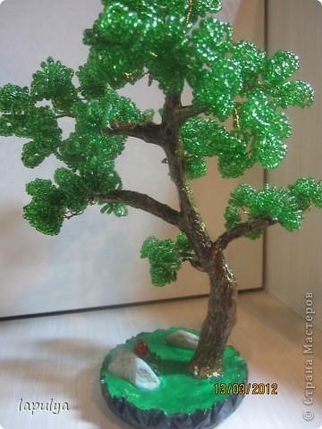Делала бонсай, теперь не знаю на какое дерево  больше похоже  фото 3