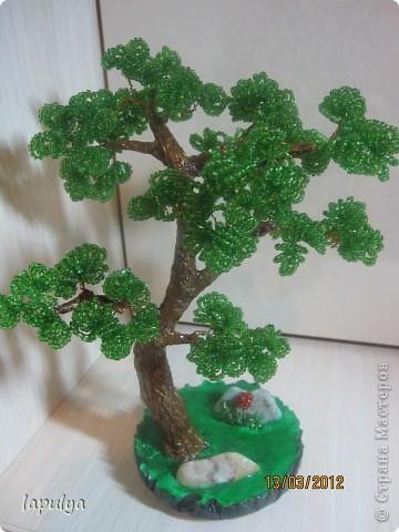 Делала бонсай, теперь не знаю на какое дерево  больше похоже  фото 5