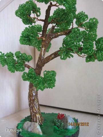 Делала бонсай, теперь не знаю на какое дерево  больше похоже  фото 4