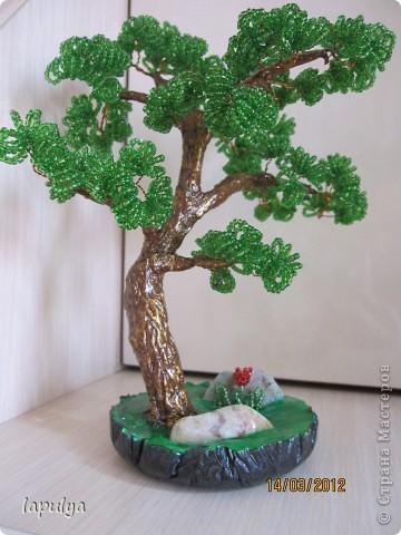 Делала бонсай, теперь не знаю на какое дерево  больше похоже  фото 2
