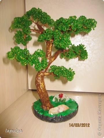 Делала бонсай, теперь не знаю на какое дерево  больше похоже  фото 1