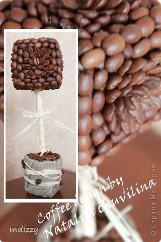 Кофейное деревце-6