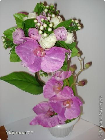 Орхидея растёт на дереве? У меня ДА!