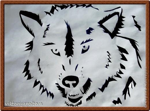 Что люди знают о волках? То, что они свирепы и опасны, вероломны и коварны. Что их надо уничтожать. Так думают о волках те, кто о них ничего не знает. На самом деле волки очень редко нападают на людей. Как и все хищники они охотятся что бы прокормиться и живут своей жизнью, стараясь держаться подальше от людей. Я предлагаю вам приподнять завесу тайны и окунуться в загадочный мир - мир Волка.    фото 1