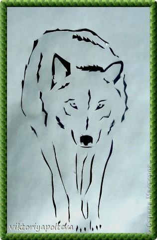 Что люди знают о волках? То, что они свирепы и опасны, вероломны и коварны. Что их надо уничтожать. Так думают о волках те, кто о них ничего не знает. На самом деле волки очень редко нападают на людей. Как и все хищники они охотятся что бы прокормиться и живут своей жизнью, стараясь держаться подальше от людей. Я предлагаю вам приподнять завесу тайны и окунуться в загадочный мир - мир Волка.    фото 2