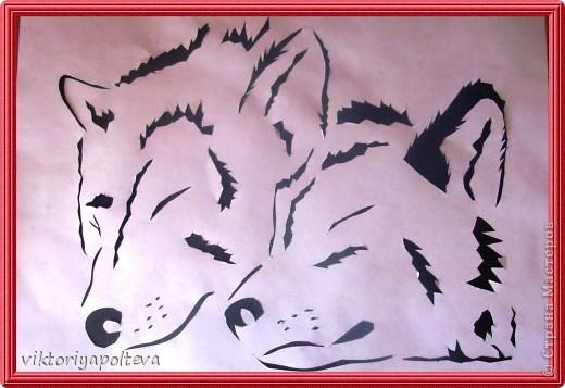 Что люди знают о волках? То, что они свирепы и опасны, вероломны и коварны. Что их надо уничтожать. Так думают о волках те, кто о них ничего не знает. На самом деле волки очень редко нападают на людей. Как и все хищники они охотятся что бы прокормиться и живут своей жизнью, стараясь держаться подальше от людей. Я предлагаю вам приподнять завесу тайны и окунуться в загадочный мир - мир Волка.    фото 3