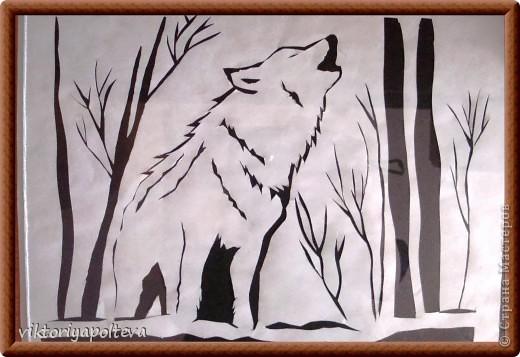 Что люди знают о волках? То, что они свирепы и опасны, вероломны и коварны. Что их надо уничтожать. Так думают о волках те, кто о них ничего не знает. На самом деле волки очень редко нападают на людей. Как и все хищники они охотятся что бы прокормиться и живут своей жизнью, стараясь держаться подальше от людей. Я предлагаю вам приподнять завесу тайны и окунуться в загадочный мир - мир Волка.    фото 4