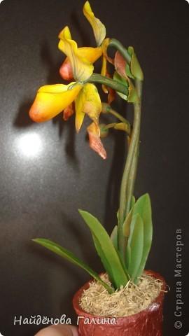 Мастер-класс Лепка Как я делала Венерин башмачок из холодного фарфора Фарфор холодный фото 17