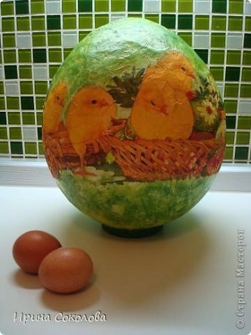 Вот такое огромное яйцо мы сделали с сыном на школьную пасхальную выставку (куриные яички я положила рядом, чтобы виден был размер нашего яйца).  фото 1