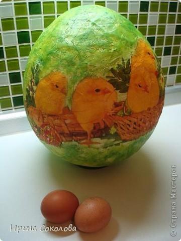 Вот такое огромное яйцо мы сделали с сыном на школьную пасхальную выставку (куриные яички я положила рядом, чтобы виден был размер нашего яйца).  фото 15