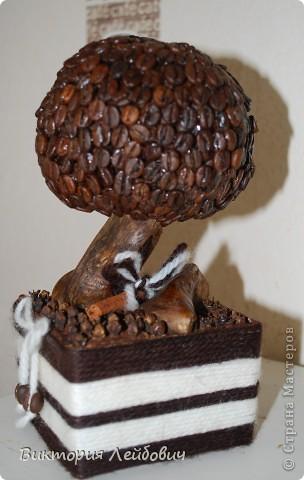 мое первое кофейно-корично-гвоздичное дерево фото 3