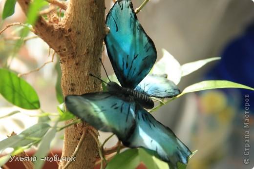 насмотрелась вчера на великолепную бабочку у Марины V.... И твердо решила - тоже хочу))) Конечно, до её работы мне далековато... непоседа, сбрала не досохшую)). Но результатом довольна фото 3