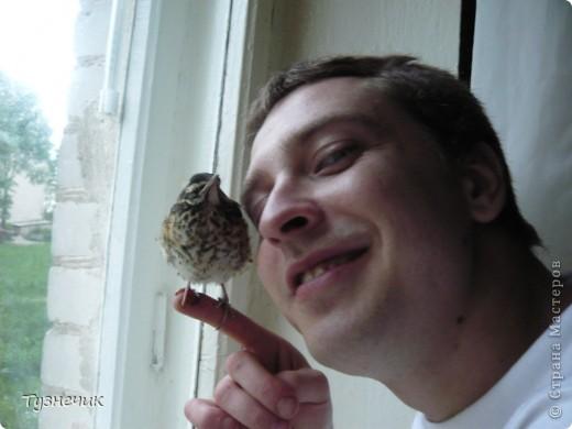 """Однажды по весне, я работала в детском лагере (приводили его в порядок). Наш сторож сказал, что нашел птичку, птенчика, который выпал из гнезда...Я не смогла пройти мимо и забрала его домой. Муж, когда я ему позвонила и сказала: """"Здесь маленький птенчик, погибнет, если не забрать"""" - ответил: """"Забирай, вырастим""""...)))) Вот так у нас появился малыш-птенчик фото 4"""