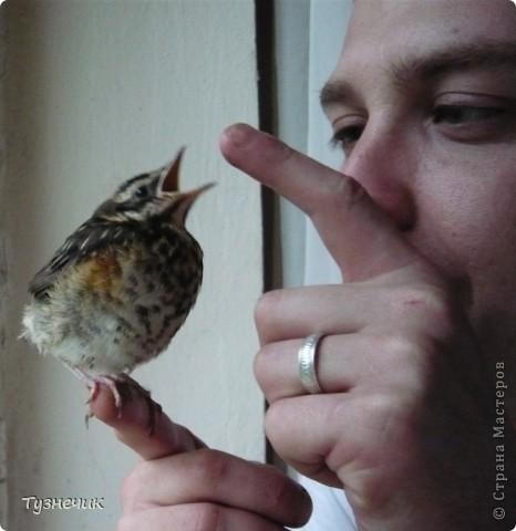 """Однажды по весне, я работала в детском лагере (приводили его в порядок). Наш сторож сказал, что нашел птичку, птенчика, который выпал из гнезда...Я не смогла пройти мимо и забрала его домой. Муж, когда я ему позвонила и сказала: """"Здесь маленький птенчик, погибнет, если не забрать"""" - ответил: """"Забирай, вырастим""""...)))) Вот так у нас появился малыш-птенчик фото 5"""