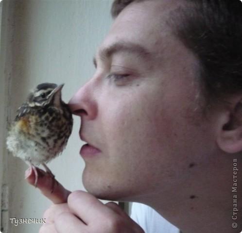 """Однажды по весне, я работала в детском лагере (приводили его в порядок). Наш сторож сказал, что нашел птичку, птенчика, который выпал из гнезда...Я не смогла пройти мимо и забрала его домой. Муж, когда я ему позвонила и сказала: """"Здесь маленький птенчик, погибнет, если не забрать"""" - ответил: """"Забирай, вырастим""""...)))) Вот так у нас появился малыш-птенчик фото 6"""