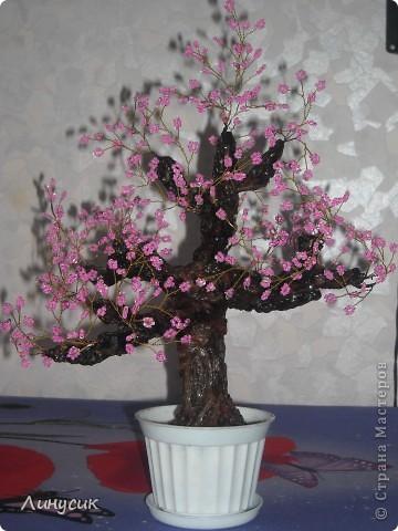 Воздушная сакура фото 7
