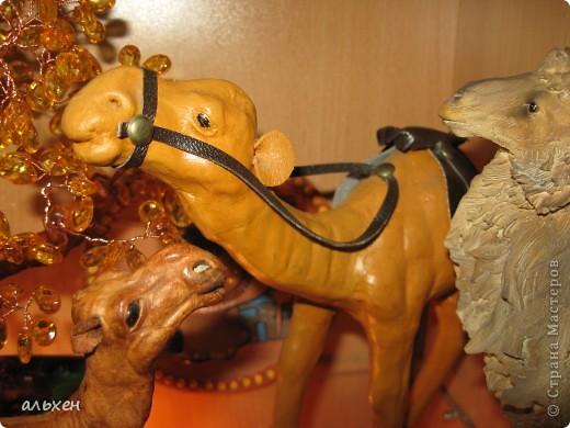 Доброго времени суток, дорогие мои жители СМ!!!!!! Обещала девочкам показать свою коллекцию верблюдов..... и.... подумала - может быть, ещё кому нибудь  захочется посмотреть на моих красавцев..... Милости прошу!!!! Много писать не буду, т.к. не уверена, что загружу.... пятый день пытаюсь..... на последнем этапе всё зависает..... и..... кирдык..... Но я же упёртая..... как баран..... не успокоюсь, пока не загружу..... Это моя пятая попытка...... надеюсь заключительная.....  фото 6