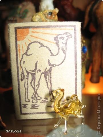 Доброго времени суток, дорогие мои жители СМ!!!!!! Обещала девочкам показать свою коллекцию верблюдов..... и.... подумала - может быть, ещё кому нибудь  захочется посмотреть на моих красавцев..... Милости прошу!!!! Много писать не буду, т.к. не уверена, что загружу.... пятый день пытаюсь..... на последнем этапе всё зависает..... и..... кирдык..... Но я же упёртая..... как баран..... не успокоюсь, пока не загружу..... Это моя пятая попытка...... надеюсь заключительная.....  фото 9