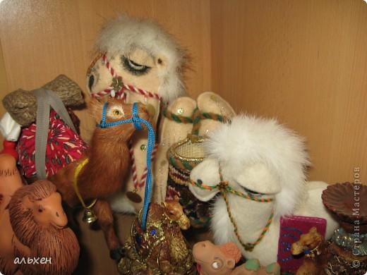 Доброго времени суток, дорогие мои жители СМ!!!!!! Обещала девочкам показать свою коллекцию верблюдов..... и.... подумала - может быть, ещё кому нибудь  захочется посмотреть на моих красавцев..... Милости прошу!!!! Много писать не буду, т.к. не уверена, что загружу.... пятый день пытаюсь..... на последнем этапе всё зависает..... и..... кирдык..... Но я же упёртая..... как баран..... не успокоюсь, пока не загружу..... Это моя пятая попытка...... надеюсь заключительная.....  фото 16