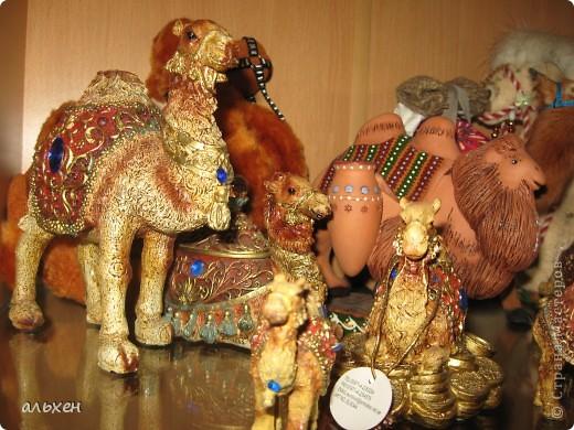 Доброго времени суток, дорогие мои жители СМ!!!!!! Обещала девочкам показать свою коллекцию верблюдов..... и.... подумала - может быть, ещё кому нибудь  захочется посмотреть на моих красавцев..... Милости прошу!!!! Много писать не буду, т.к. не уверена, что загружу.... пятый день пытаюсь..... на последнем этапе всё зависает..... и..... кирдык..... Но я же упёртая..... как баран..... не успокоюсь, пока не загружу..... Это моя пятая попытка...... надеюсь заключительная.....  фото 19