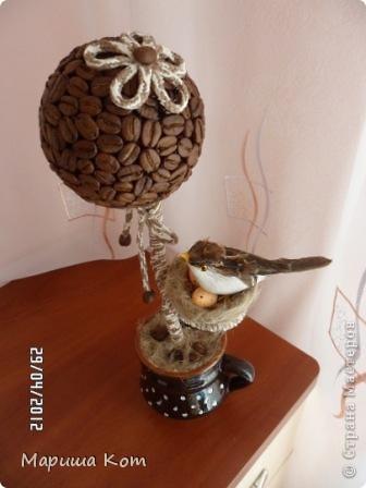 Привет Страна Мастеров! Ещё одно кофейное деревце выросло у меня)))) Подарила его другу на день рождения.  фото 3
