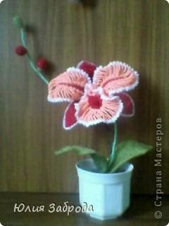 Орхидея для мамы
