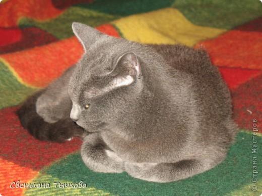 Насмотревшись телепередач с участием кошачьих психологов,мы решили-у нашей Муры должна быть своя личная территория. фото 6