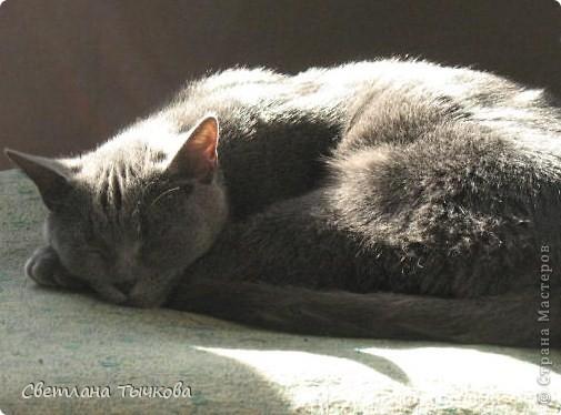 Насмотревшись телепередач с участием кошачьих психологов,мы решили-у нашей Муры должна быть своя личная территория. фото 7