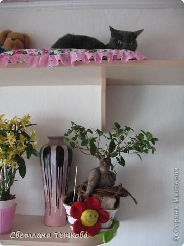 Насмотревшись телепередач с участием кошачьих психологов,мы решили-у нашей Муры должна быть своя личная территория. фото 3
