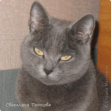 Насмотревшись телепередач с участием кошачьих психологов,мы решили-у нашей Муры должна быть своя личная территория. фото 9