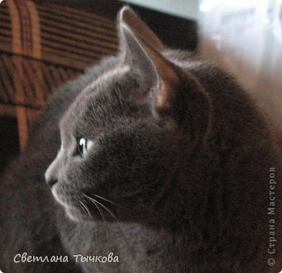 Насмотревшись телепередач с участием кошачьих психологов,мы решили-у нашей Муры должна быть своя личная территория. фото 8