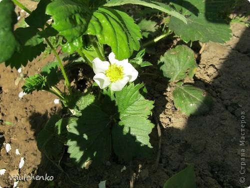 УРА!!! Май цветет и празднует! Всех поздравляю с самым нежно-сиренево-ландышевым зелено-праздничным МАЕМ!!! вот и у меня получилось такое майское деревце - цветущее и радостное! фото 14