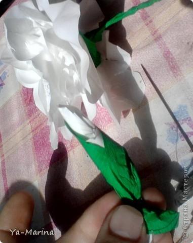Моя мама делала раньше к  празднику победы такие цветы. Сегодня сынуля сказал, что в школу им нужны белые цветы, и мы дружно сели их делать, заодно решили отснять процесс изготовления. фото 12
