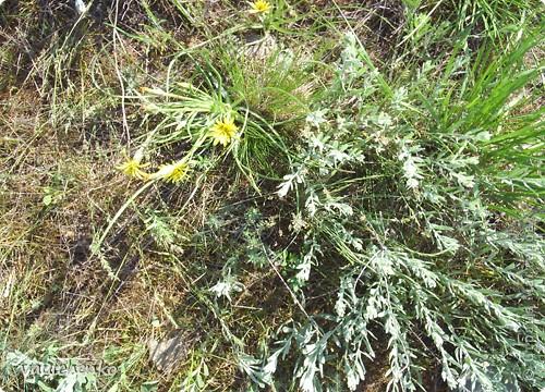 УРА!!! Май цветет и празднует! Всех поздравляю с самым нежно-сиренево-ландышевым зелено-праздничным МАЕМ!!! вот и у меня получилось такое майское деревце - цветущее и радостное! фото 16