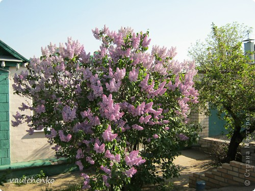 УРА!!! Май цветет и празднует! Всех поздравляю с самым нежно-сиренево-ландышевым зелено-праздничным МАЕМ!!! вот и у меня получилось такое майское деревце - цветущее и радостное! фото 11