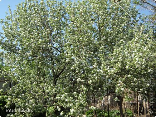 УРА!!! Май цветет и празднует! Всех поздравляю с самым нежно-сиренево-ландышевым зелено-праздничным МАЕМ!!! вот и у меня получилось такое майское деревце - цветущее и радостное! фото 9