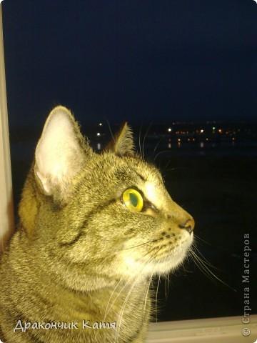 Хочу представить вам мою любимую кошку Анфиску.Мама подарила её мне на 8 марта когда я была в первом классе.С тех пор мы неразлучные друзья! фото 2