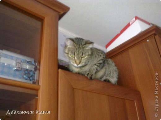 Хочу представить вам мою любимую кошку Анфиску.Мама подарила её мне на 8 марта когда я была в первом классе.С тех пор мы неразлучные друзья! фото 4