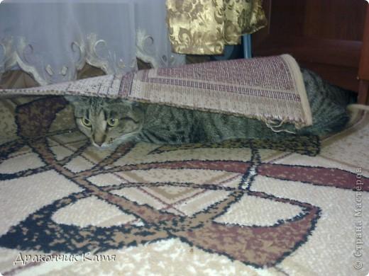 Хочу представить вам мою любимую кошку Анфиску.Мама подарила её мне на 8 марта когда я была в первом классе.С тех пор мы неразлучные друзья! фото 3