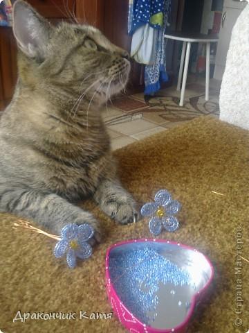 Хочу представить вам мою любимую кошку Анфиску.Мама подарила её мне на 8 марта когда я была в первом классе.С тех пор мы неразлучные друзья! фото 5