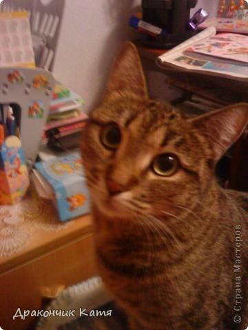 Хочу представить вам мою любимую кошку Анфиску.Мама подарила её мне на 8 марта когда я была в первом классе.С тех пор мы неразлучные друзья! фото 1