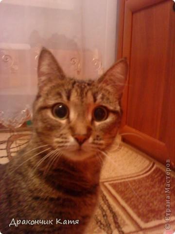 Хочу представить вам мою любимую кошку Анфиску.Мама подарила её мне на 8 марта когда я была в первом классе.С тех пор мы неразлучные друзья! фото 10