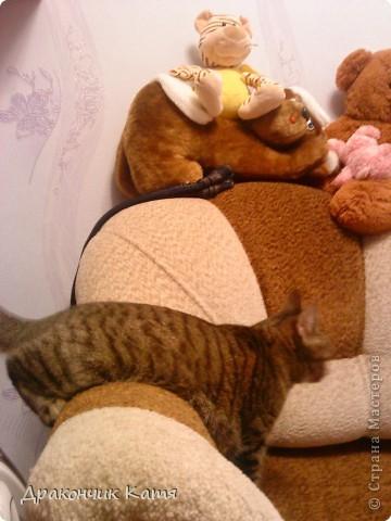 Хочу представить вам мою любимую кошку Анфиску.Мама подарила её мне на 8 марта когда я была в первом классе.С тех пор мы неразлучные друзья! фото 12