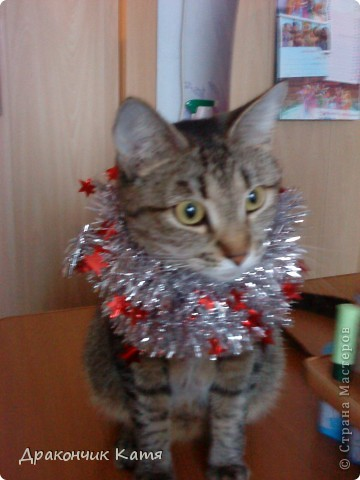 Хочу представить вам мою любимую кошку Анфиску.Мама подарила её мне на 8 марта когда я была в первом классе.С тех пор мы неразлучные друзья! фото 13