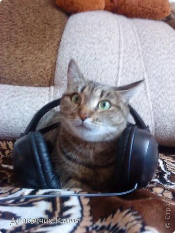 Хочу представить вам мою любимую кошку Анфиску.Мама подарила её мне на 8 марта когда я была в первом классе.С тех пор мы неразлучные друзья! фото 9