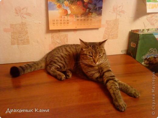 Хочу представить вам мою любимую кошку Анфиску.Мама подарила её мне на 8 марта когда я была в первом классе.С тех пор мы неразлучные друзья! фото 6