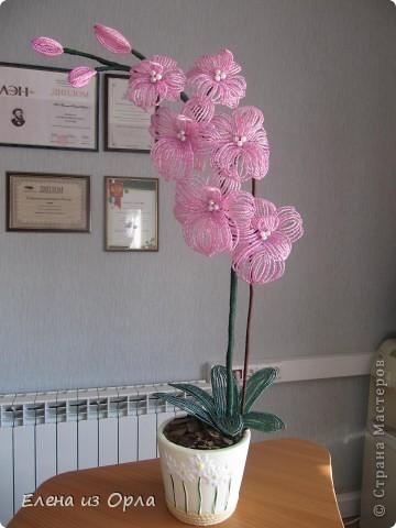 На самом деле эту орхидею я начала плести раньше, чем белую. Но так, как не хватило бисера на листики и долго не было завоза, она получилась у меня второй. Орхидея с опозданием. фото 1
