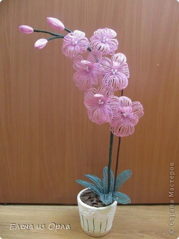 На самом деле эту орхидею я начала плести раньше, чем белую. Но так, как не хватило бисера на листики и долго не было завоза, она получилась у меня второй. Орхидея с опозданием. фото 2