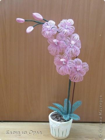 На самом деле эту орхидею я начала плести раньше, чем белую. Но так, как не хватило бисера на листики и долго не было завоза, она получилась у меня второй. Орхидея с опозданием. фото 7