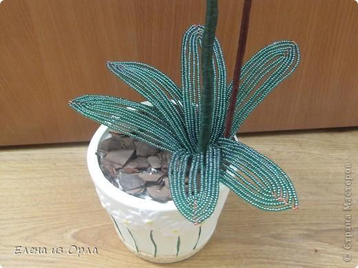 На самом деле эту орхидею я начала плести раньше, чем белую. Но так, как не хватило бисера на листики и долго не было завоза, она получилась у меня второй. Орхидея с опозданием. фото 6